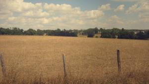 champ de blé
