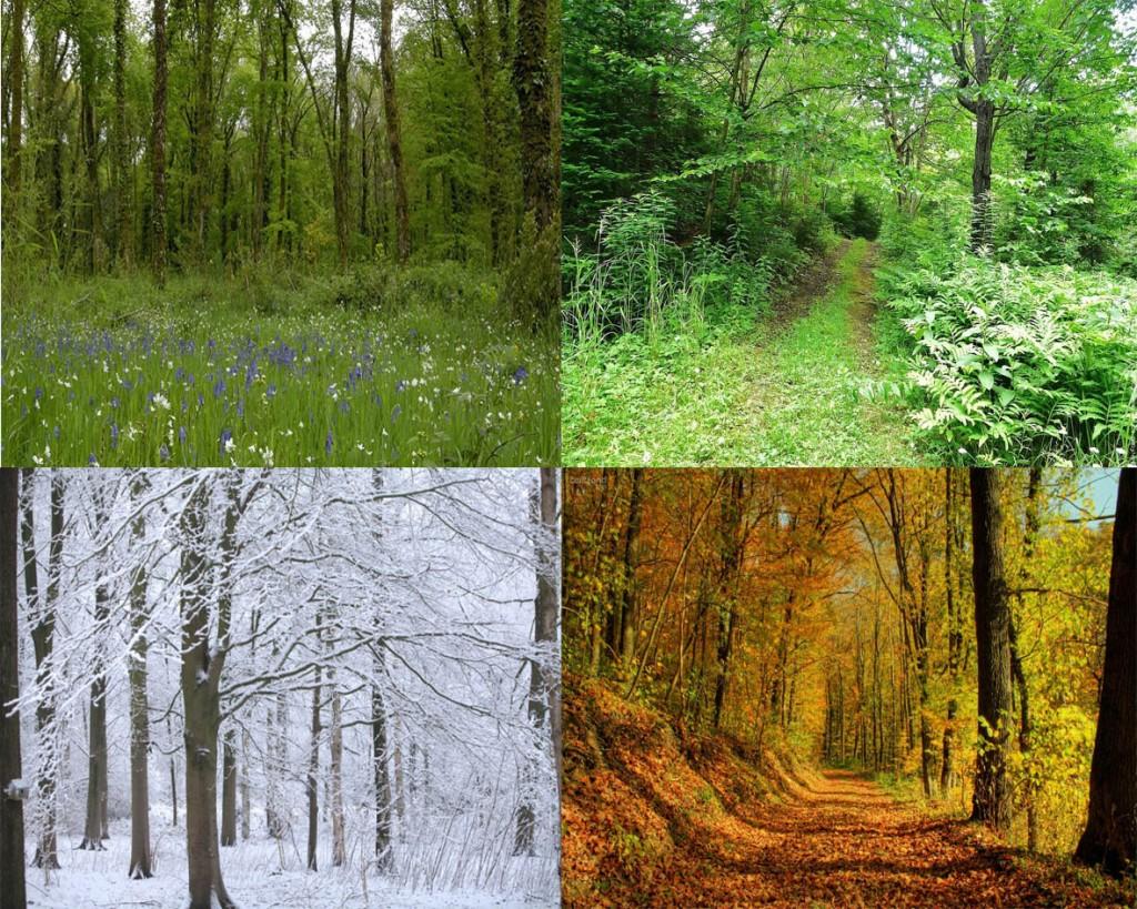 Limousin nature environnement for Le jardin des 4 saisons pusignan